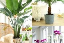In the Garden / Gardening tips and tricks. House plants, colorful flowers and more in the Garden.