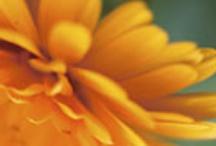 Lupus/Autoimmune Info / by Elizabeth Walker