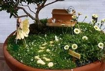 Moss Gardens & Terrariums / Small, soft, green mounds of grass-like plants with no root systems.  / by Raindrops and Roses