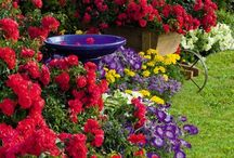 Gardens, Flowers and Outdoor Areas / Bringing beauty to your back yard / by Lisa Dittmander