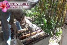 Honey Girl Videos