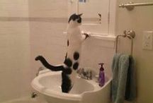 Funny Mishaps / Funny incidents caught on camera!! Sure to tickle your fancy!! HEHEHE