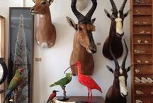 TAXIDERMY / We're not going to pretend that we don't have a soft spot for it...
