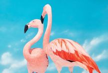 .flamingo pink / I love flamingo's they are so beautiful!