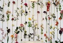 Wallpaper. / by Jolene @ pixéi pins
