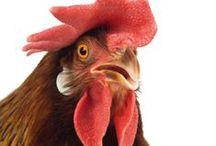 Campagne Intime / Les animaux de la ferme comme vous ne les avez jamais vus!
