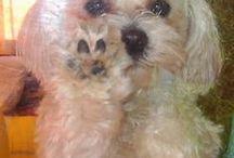 MALTAŃCZYK I INNE / Mój pies wabi się Dżekuś i skończył już 4 lata. Zapraszam na mojego bloga - jolciafasolcia.blogspot.com