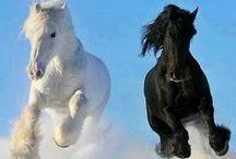 BILDER - Hästar
