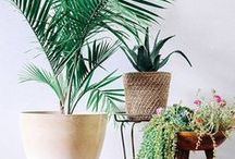 Decorating With Plants / Inspiration, how to and tips for bringing plants into your decor.
