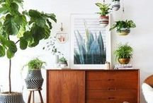 INDOOR PLANTS / Greenify your space with indoor plants. Find ideas and inspiration for indoor plant ideas to add to your own home.