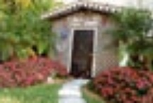A Country Cat House / Our cat Resort and Spa in Miami Florida / by A Country Cat House