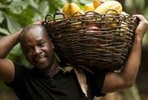 Fairtrade Farmers and Workers / Fairtrade make a difference for more than 1,2 million farmers and workers in developing countries.  / by Fairtrade America