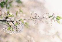 Flora | botany