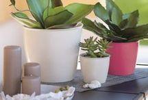 ACADEMY LINE FOR HOME / ACADEMY è la linea di vasi e coprivasi STEFANPLAST per gli utilizzi indoor. Raffinati ed eleganti si adattano agli stili di vita più evoluti e valorizzano l'ambiente. I vasi ACADEMY LINE sono disponibili in più colori e in una vasta gamma di misure.