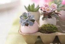 Terrariums / How to make a terrarium and terrarium ideas. Don't forget the succulents