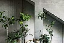 exterior / interior plants
