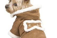 Im not one to dress my dog but she does shiver in winter...
