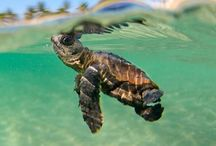 •t u r t l e  l o v e• / My addiction and love for turtles:)