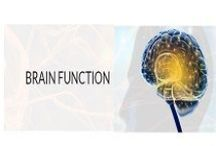 Brain Function Supplement / We made organic supplements specially improve brain function. Shop amla, ashwagandha, bacopa, turmeric and many more organic herbs at best price.