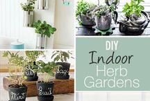 Gardening & Landscaping / Tips & ideas for home gardening & landscaping