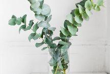 Green / Plants;