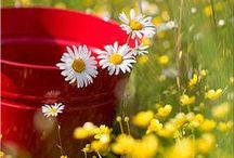 BENVENUTA PRIMAVERA!!! / Non importa quanto freddo sia l'inverno,dopo ci sarà sempre la primavera!