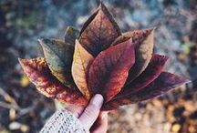 Autumn Photography Ideas