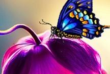 Butterfly's / by Alex Shepherd