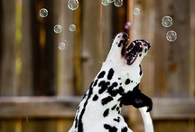 Photos- animal action