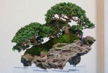 Plants- bonsai