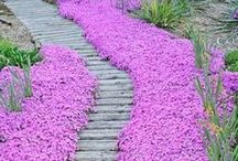 Colorful Pathways / Pathways can be planted with a variety of plant material that tolerates foot traffic.