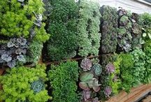 Living Walls / Bright Green Living Wall Systems are the perfect modules for D.I.Y. gardeners.  Get yours now at http://www.littleprinceoforegonnursery.com/ecommerce.php #livingwalls #verticalgardens