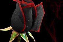 Çiçek / Çiçek