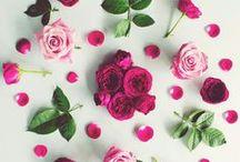 FLATLAY FLOWER PHOTOGRAPHY