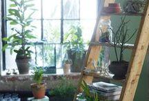 planter/jardiner/aménager