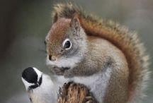 Squirrels / Squirrels