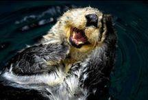 otters ❤