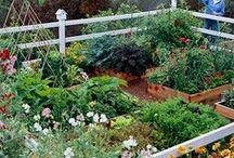 Gardening / by Deena
