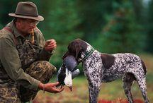 Jachthonden / Jachthonden in het algemeen en DSK (GSP) en DSD (GWP) in bijzonder.