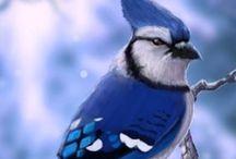Beautiful Birds / Bijzonder mooie vogels