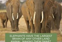 ELEPHANT QUOTES AND FACTS