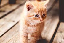 • Cute! •