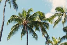 Palm tree lover
