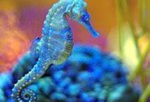 Seahorses / Check out my blog filled with inspirational pictures and my own personal quotes written from my heart and soul. =) Melanie http://positiveandinspirationalquotes.blogspot.com/