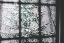 w i n t e r / Winter wonderland