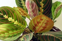 Home: Houseplants / bringing the outdoors in / by Maria V