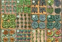 Fruit & Vege - square foot gardening