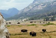 Yellowstone National Park / The Union Pacific Dining Lodge is located right at the West Entrance to Yellowstone National Park. Have your event here and then explore the park!