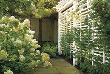Gardening - privacy ideas
