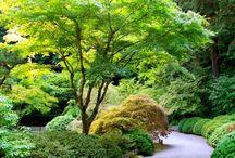 Gardening - favourite trees